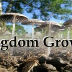 growing the kingdom of god from incremental to exponential